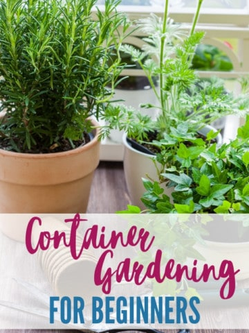 """potting containers filled with herbs and flowers with title text """"container gardening for beginners"""""""