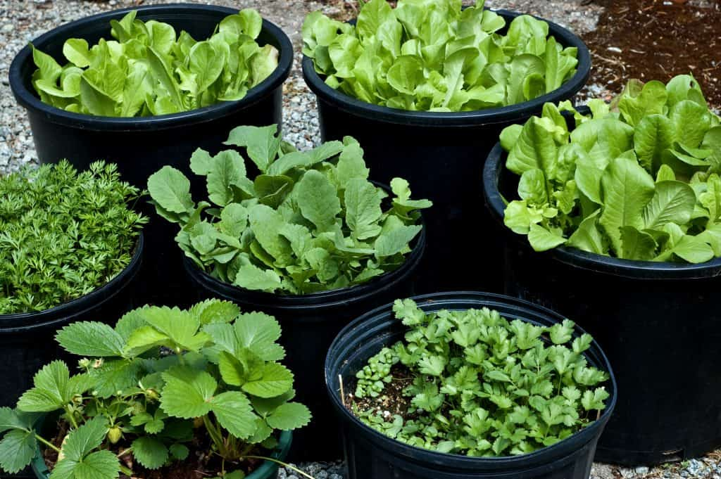 containers for herbs and salad greens