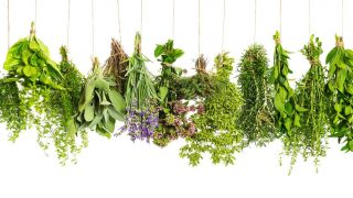 How to Grow Windowsill Herbs